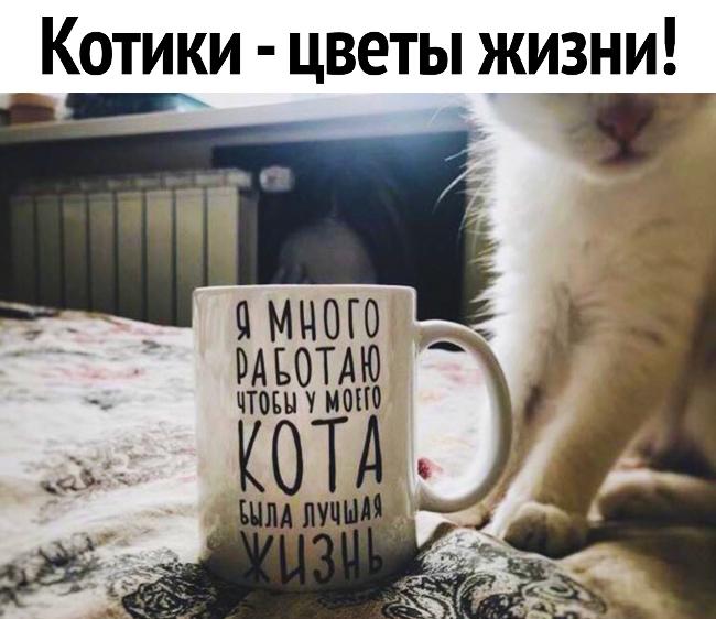 Прикольные и смешные фото спящих кошек и котов | 562x650