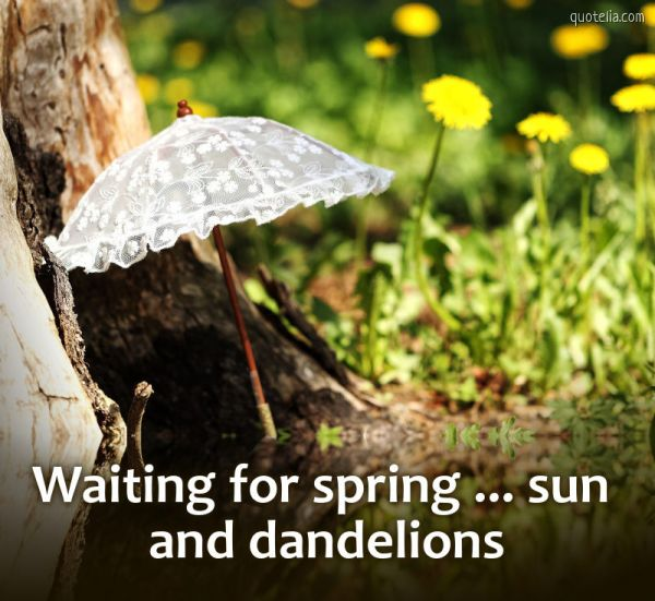 Waiting for spring ... sun and dandelions