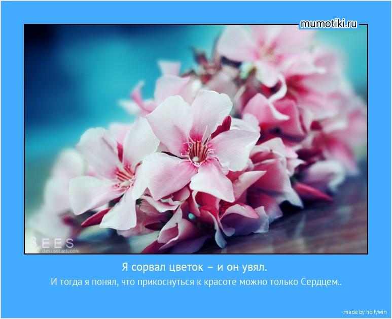 Я сорвал цветок – и он увял. И тогда я понял, что прикоснуться к красоте можно только Сердцем.. #мотиватор