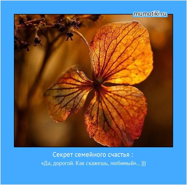 Секрет семейного счастья : «Да, дорогой. Как скажешь, любимый»... ))) #мотиватор