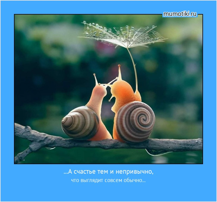 ...А счастье тем и непривычно, что выглядит совсем обычно... #мотиватор