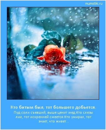 Кто битым был, тот большего добьется. Пуд соли съевший, выше ценит мед. Кто слезы лил, тот искренней смеется. Кто умирал, тот знает, что живет... #мотиватор