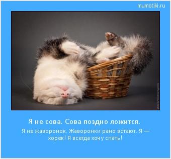 Я не сова. Сова поздно ложится. Я не жаворонок. Жаворонки рано встают. Я — хорек! Я всегда хочу спать! #мотиватор