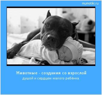 Животные - создания со взрослой душой и сердцем малого ребёнка. #мотиватор