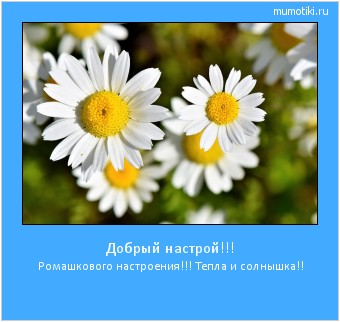 Добрый настрой!!! Ромашкового настроения!!! Тепла и солнышка!! #мотиватор