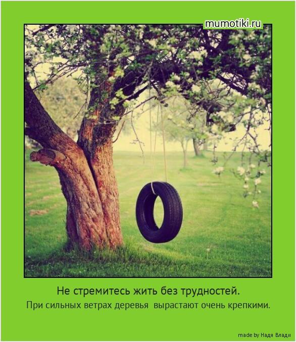Не стремитесь жить без трудностей. При сильных ветрах деревья вырастают очень крепкими. #мотиватор