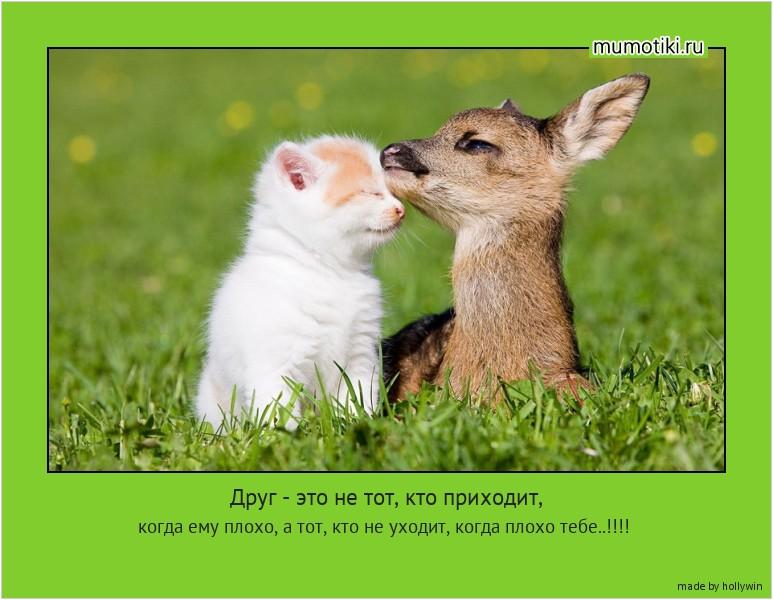 Друг - это не тот, кто приходит, когда ему плохо, а тот, кто не уходит, когда плохо тебе..!!!! #мотиватор