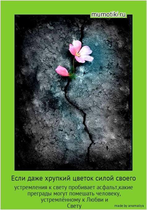 Если даже хрупкий цветок силой своего устремления к свету пробивает асфальт,какие преграды могут помешать человеку, устремлённому к Любви и Свету #мотиватор