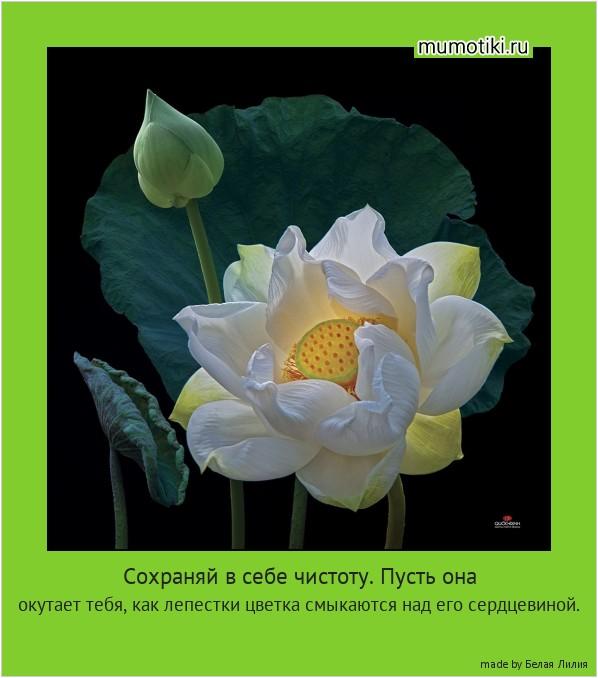 Сохраняй в себе чистоту. Пусть она окутает тебя, как лепестки цветка смыкаются над его сердцевиной. #мотиватор
