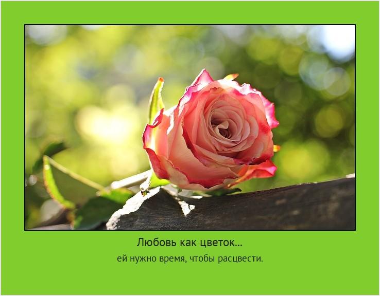 Любовь как цветок... ей нужно время, чтобы расцвести. #мотиватор