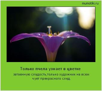 Только пчела узнает в цветке затаенную сладость,только художник на всем чует прекрасного след. #мотиватор