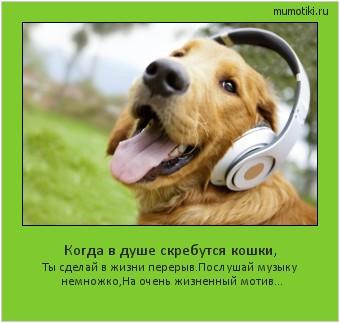Когда в душе скребутся кошки, Ты сделай в жизни перерыв. Послушай музыку немножко, На очень жизненный мотив... #мотиватор