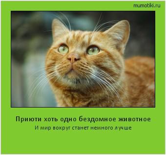 Приюти хоть одно бездомное животное И мир вокруг станет немного лучше #мотиватор
