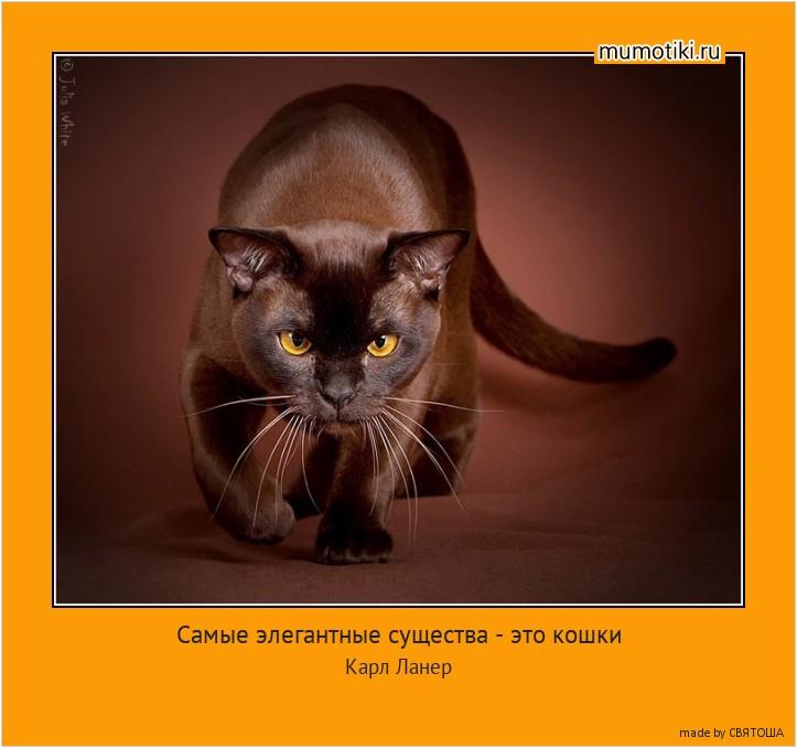 Самые элегантные существа - это кошки Ни одна женщина не умеет так носить меха!Так спокойно сидеть на мужском плече!И так жалобно глядеть на весь мир! Карл Ланер #мотиватор