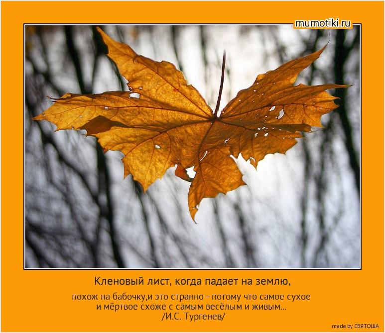 Кленовый лист, когда падает на землю, похож на бабочку,и это странно—потому что самое сухое и мёртвое схоже с самым весёлым и живым... /И.С. Тургенев/ #мотиватор