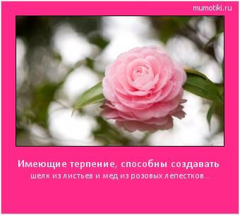 Имеющие терпение, способны создавать шелк из листьев и мед из розовых лепестков... #мотиватор