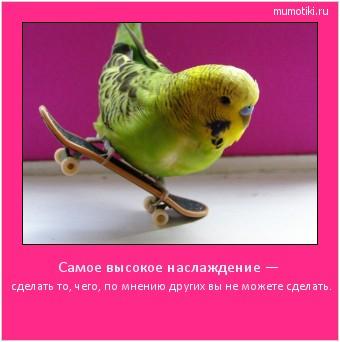 Самое высокое наслаждение —   сделать то, чего, по мнению других вы не можете сделать. #мотиватор