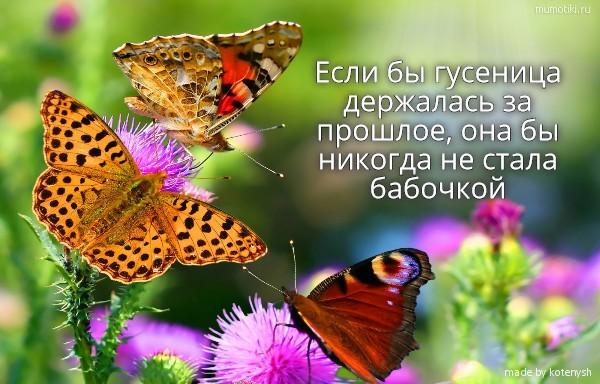 Если бы гусеница держалась за прошлое, она бы никогда не стала бабочкой #цитата