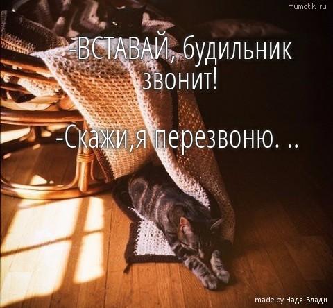 -ВСТАВАЙ, будильник звонит! -Скажи,я перезвоню. .. #цитата