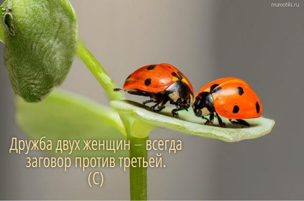 Дружба двух женщин – всегда заговор против третьей. (С) #цитата