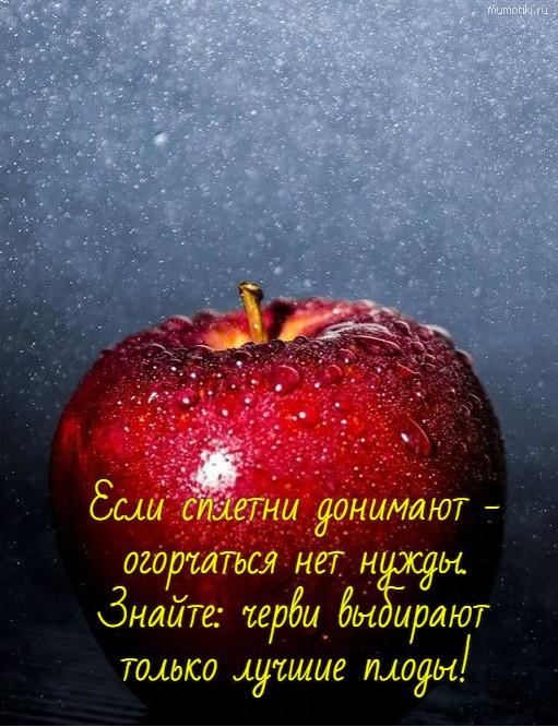 Если сплетни донимают - огорчаться нет нужды. Знайте: черви выбирают только лучшие плоды! #цитата