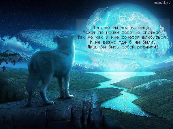 Где же ты моя волчица, Может по ночам тебе не спиться, Так же как и мне хочется влюбиться. И не важно где б мы были, Лишь бы быть тобой родными! #цитата