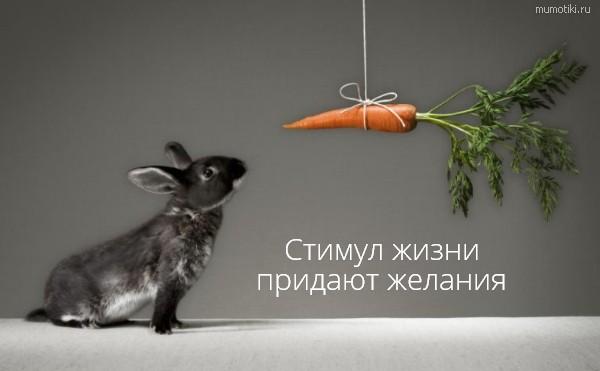 Стимул жизни придают желания придают желания #цитата