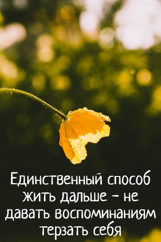 Единственный способ жить дальше - не давать воспоминаниям терзать себя #цитата