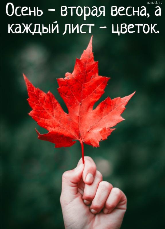 Осень - вторая весна, а каждый лист - цветок.