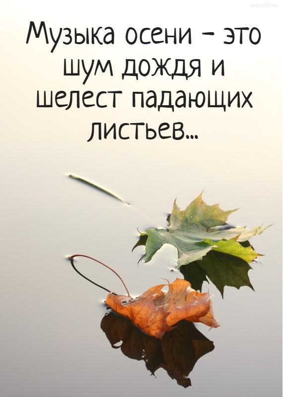 Музыка осени - это шум дождя и шелест падающих листьев... #цитата