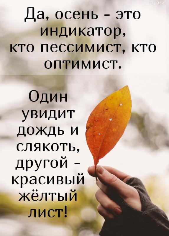Да, осень - это индикатор, кто пессимист, кто оптимист. Один увидит дождь и слякоть, другой - красивый жёлтый лист! #цитата