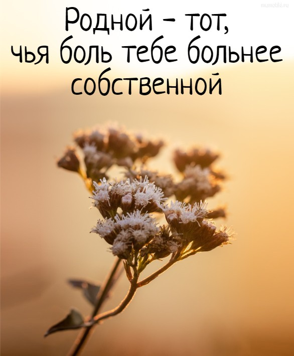 Родной - тот, чья боль тебе больнее собственной #цитата
