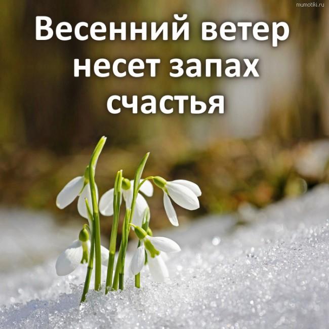 Весенний ветер несет запах счастья #цитата