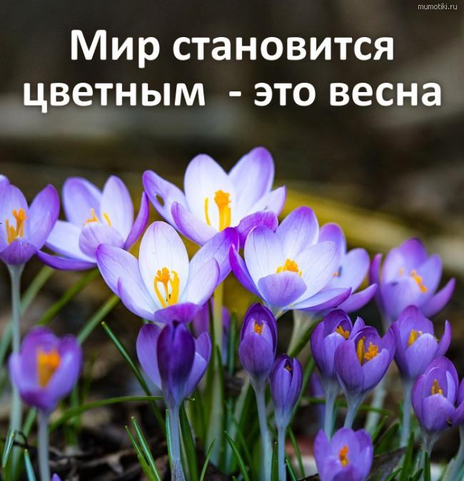 Мир становится цветным - это весна #цитата