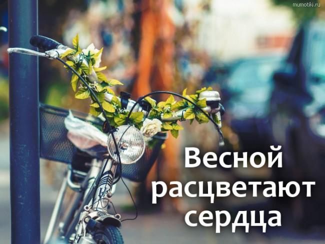 Весной расцветают сердца #цитата