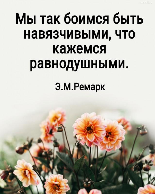Мы так боимся быть навязчивыми, что кажемся равнодушными. Э.М.Ремарк #цитата