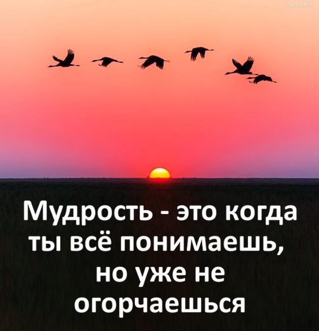 Мудрость - это когда ты всё понимаешь, но уже не огорчаешься #цитата