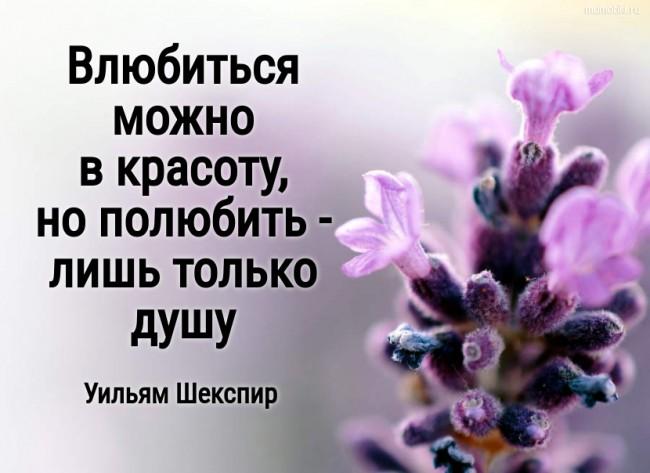 Влюбиться можно в красоту, но полюбить - лишь только душу. Уильям Шекспир #цитата