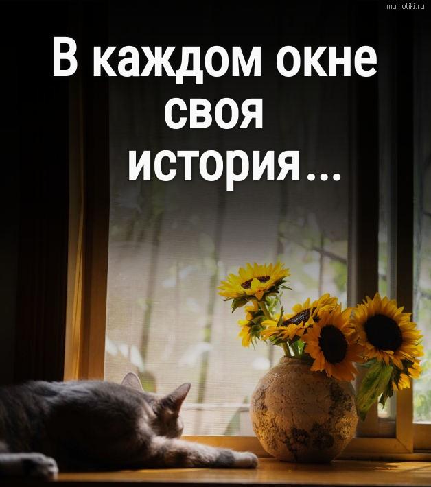 В каждом окне своя история... #цитата