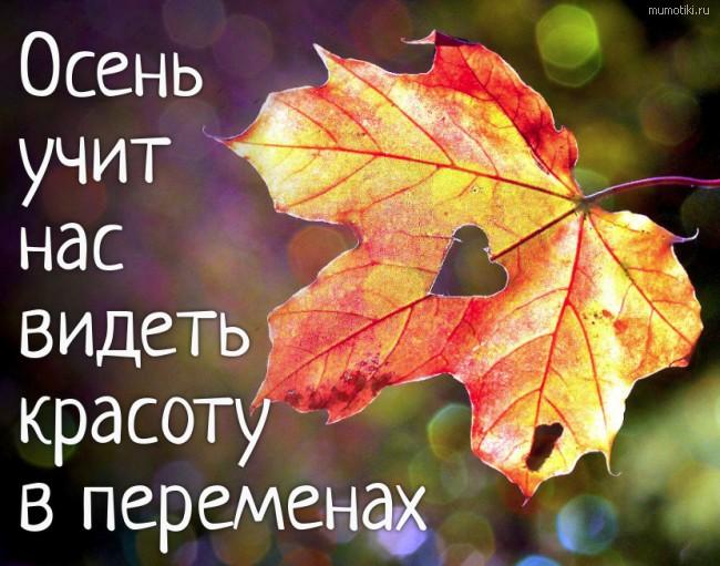 Осень учит нас видеть красоту в переменах.
