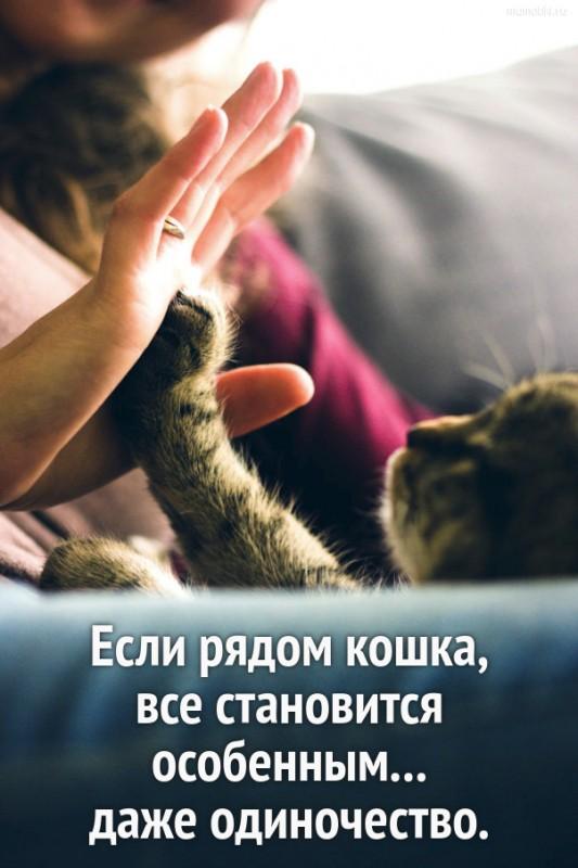 Если рядом кошка, все становится особенным... даже одиночество. #цитата