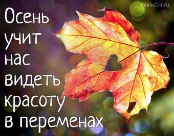 Осень учит нас видеть красоту в переменах. #цитаты