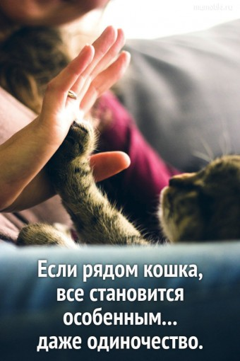 Если рядом кошка, все становится особенным... даже одиночество. #цитаты