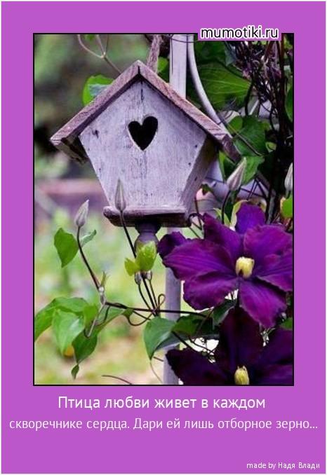 Птица любви живет в каждом скворечнике сердца. Дари ей лишь отборное зерно... #мотиватор