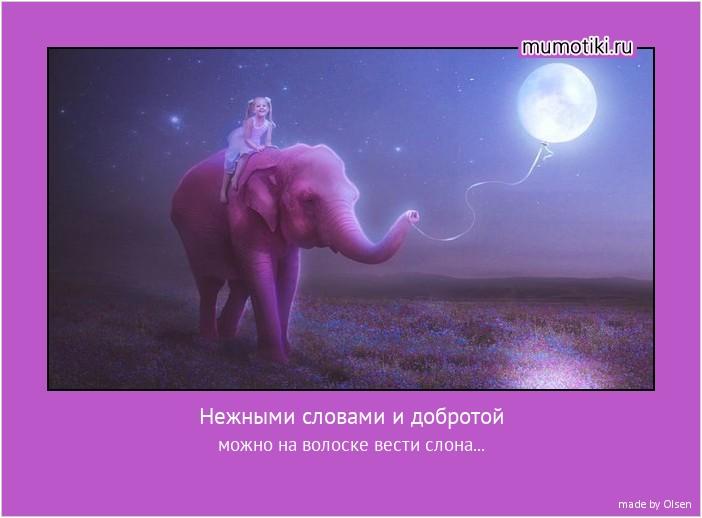 Нежными словами и добротой можно на волоске вести слона... #мотиватор
