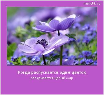Когда распускается один цветок, раскрывается целый мир. #мотиватор