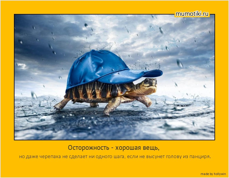 Осторожность - хорошая вещь, но даже черепаха не сделает ни одного шага, если не высунет голову из панциря. #мотиватор