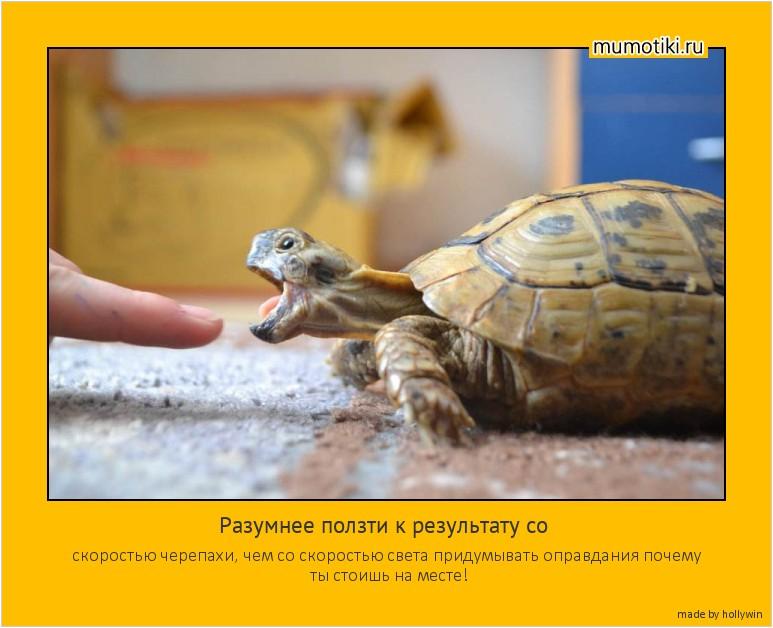 Разумнее ползти к результату со скоростью черепахи, чем со скоростью света придумывать оправдания почему ты стоишь на месте! #мотиватор