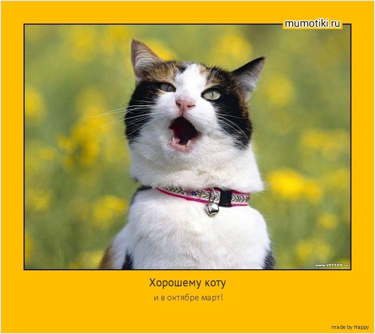 Хорошему коту и в октябре март! #мотиватор