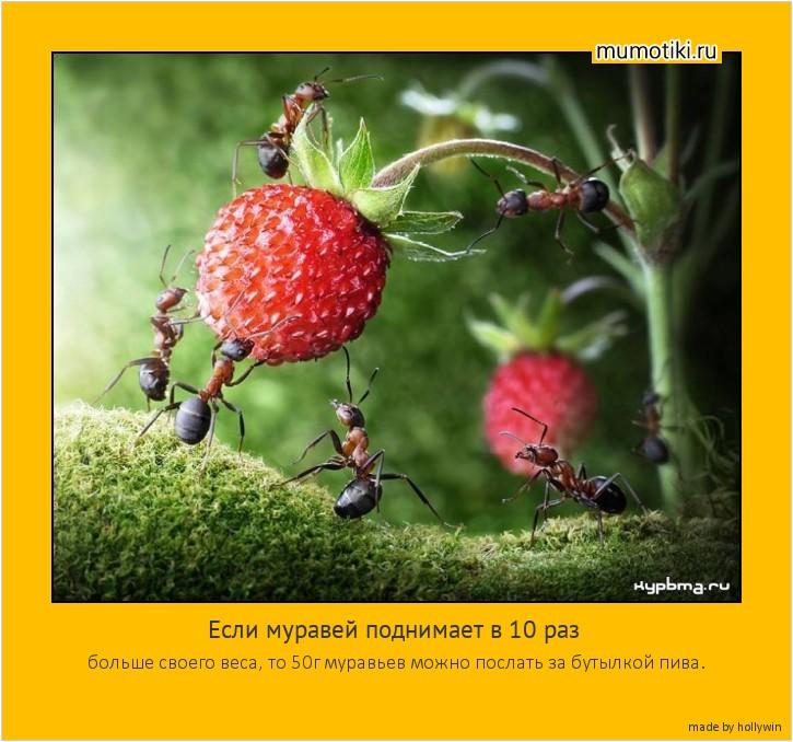 Если муравей поднимает в 10 раз больше своего веса, то 50г муравьев можно послать за бутылкой пива. #мотиватор